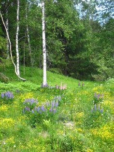 Forest - Tillinmäki, Espoo, Finland