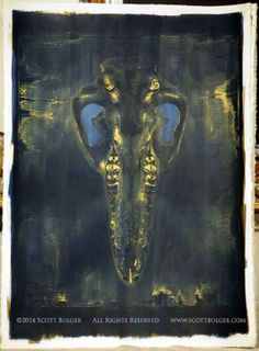 """22"""" x 30"""" cyanotype and gum bichromate on BFK Rives."""