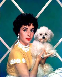 Elizabeth Taylor with her Maltese (If this is a Maltese, then it is a Maltese/Poodle mix... still precious.)