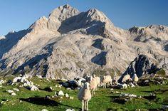 Triglavski narodni park - Mednarodni festival alpskega cvetja, Bohinj - Slovenija
