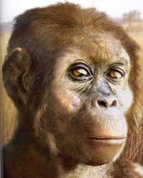 Australopithecus afarensis es un homínido extinto de la subtribu Hominina que vivió entre los 3,9 y 3 millones de años, era un homínido con frecuente actividad arbórea, ya sea recolectando frutos, cuidando a sus crías, etc. Su  masa corporal era de 45 kg para los machos y 29 kg para las hembras. Su cráneo era relativamente pequeño, con un volumen parecido al de los antropomorfos actuales, aunque en comparación con el tamaño del cuerpo era relativamente grande.