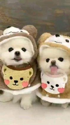two little teddy bears🐩💘