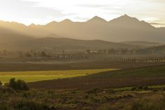 Out and About in Bonnievale Country Life, Road Trips, Farms, South Africa, African, Spaces, Landscape, Travel, Outdoor