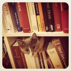 Need help finding a book?