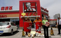 """Last week Greenpeace activists hit up a Beijing KFC store, taking with them two homeless orang-utans and a dying Sumatran tiger who held up a banner reading """"My forest home is NOT your disposable food packaging!"""" The Colonel's been keeping his chicken fresh with packaging made from rainforests. Despite the impact on Sumatran tigers KFC have been using rainforest packaging made by Asia Pulp and Paper, a company also exposed for using illegal timber."""