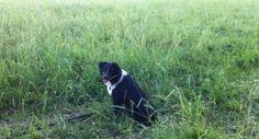 Essex Farm's watch dog in the field. (Credit: Kristin Kimball)