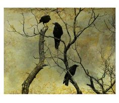 Crows Photograph