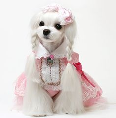 With one of the most fanciful and creatively designed pet clothing and accesories industries on the planet- Japan's pet owners have a plethora of options for giving their pets that one of a kind persona and achieving extras that are an extension of their personal self expression.