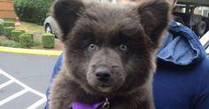 These Puppies Are So Cute It's Unreal. So Unreal, They Actually Look Like Stuffed Animals