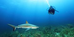 Thanks To Shark Sanctuaries, We Get To Enjoy And Explore Scenes Like These