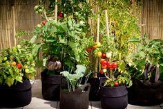 Que cultiver dans un potager sur balcon ? // http://www.deco.fr/jardin-jardinage/potager-legume/actualite-692742-rencontre-florent-imperiale-specialiste-potager-balcon.html