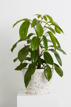 Terrazzo Large Pot White