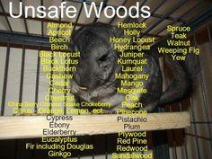 Unsafe Chinchilla Woods List