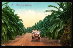 Vintage Motoring in California postcard old car driving by hhm224, $6.00