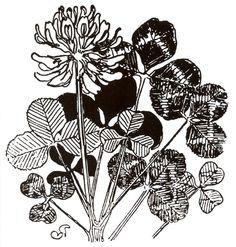 Stanisław Wyspiański, Clover Art Nouveau Illustration, Botanical Illustration, Botanical Art, Eye Candy, Cool Designs, Hair Accessories, Art Prints, Artist, Projects