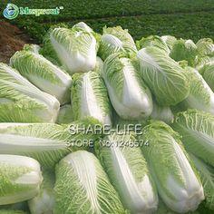 Brassica rapa sub.pekinensis 100 Semillas Col China seeds