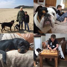 Some of our furry guests. Dog Friendly Holidays, Dog Friends, Barns, Countryside, Boston Terrier, French Bulldog, Cottage, The Incredibles, Dogs