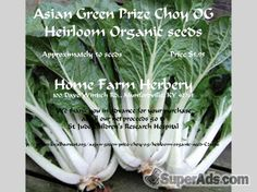 Cabbage Asian Green Prize Choy Heirloom seeds, Order now FREE shipping in New York NY - Free New York SuperAds