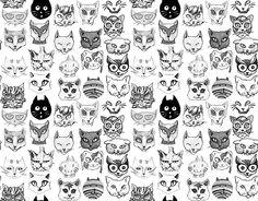 gatos // cats