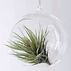 Hanging Garden in Glass Bubbles | Home Interior Design, Kitchen ...