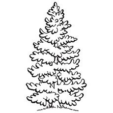 Top 25 Tree Coloring Pages For Your Little Ones
