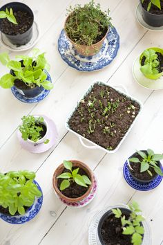 Hildas hem: Att odla inomhus