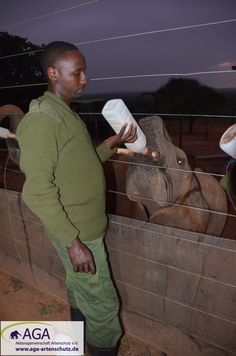 Morgens um 6 Uhr beginnt der Tag in der Ithumba-Auswilderungsstation. Die kleinen Elefanten bekommen zu allererst eine Flasche Milch. Nairobi, Flask, Elephants, National Forest, Milk, Clock