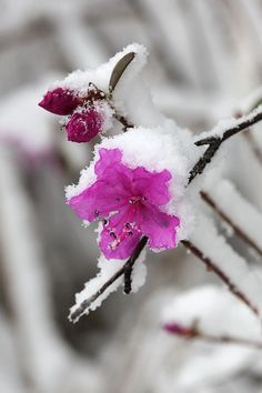 flowers in the snow