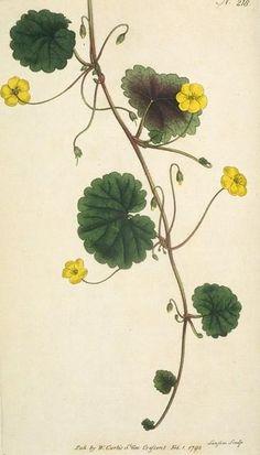 Trailing Disandra tattoo flower design