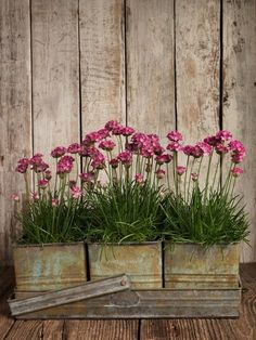 chives in vintage container!