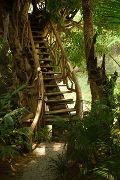 Treehouse stairs / ladder. Rainforest. Tropical.