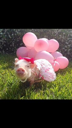 Move over Miss Piggy, Prissy Pig is in town. Cute Baby Pigs, Cute Piglets, Cute Babies, Baby Piglets, Baby Animals, Funny Animals, Cute Animals, Pink Animals, Animal Fun