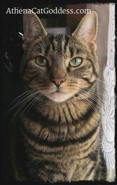 Athena, Cat Goddess: Oh no, not again!  #catblogger #cats