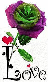 Beautiful Flowers Images, Beautiful Love Pictures, Beautiful Flowers Wallpapers, Beautiful Gif, Flower Images, Beautiful Roses, Rose Flower Wallpaper, Flowers Gif, Love Flowers
