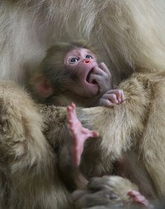 Newborn in the spring | Flickr - Photo Sharing!