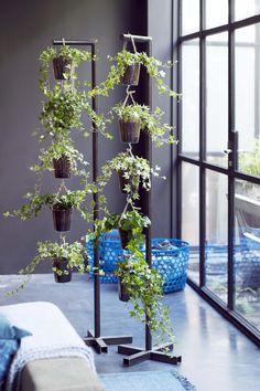 Grüne Deko mit dem Efeu.  #pflanzenfreude #efeu #ivy #zimmerpflanzen #houseplant #living #wohnen #inspiration