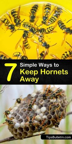 Natural Wasp Repellent, Bee Repellent, Hornet Trap, Getting Rid Of Bees, Wasp Spray, Get Rid Of Wasps, Wasp Traps, Wasp Stings, Diy Pest Control
