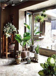 집 안에 들인 푸르름 한 점, 겨울 식물 기르기 이미지 7