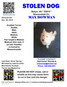 Stolen Dog - Scottish Terrier Scottie - Basye, VA, United States