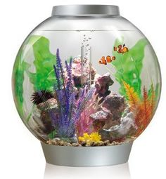 What Is A BiOrb Fish Tank????  The Latest Trend In Home Aquarium.If you want easy then you want a BiOrb fish tank. In almost all cases when you buy a BiOrb fish tank you will get all the parts needed to get started. You should have everything you need in one handy package and not have to purchase anything else. If you know about aquariums then setting up one of these will be a breeze. The nice thing is...(continue reading please click an above link)