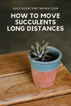 Did you buy new succulents from a nursery and having problems with carrying them? Are you moving to a new apartment and you need to transport your plants with you? Here is a great guide that explains how to carry succulents without destroying them. Succulent Care, Cacti And Succulents, Long Distance, Nursery, Garden, Plants, Garten, Baby Room, Lawn And Garden