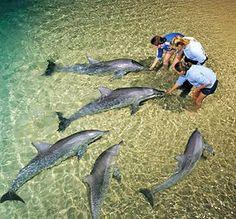 Hand feeding at Tangalooma Wild Dolphin Resort, Moreton Island, Queensland, Australia.