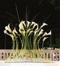 Tall Calla Lilies