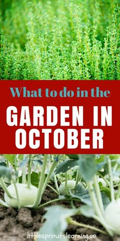 What to do in the Garden in October!
