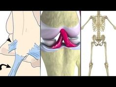 Skeletal System Rap. One of the best I've seen - includes difference between ligaments and tendons, too.