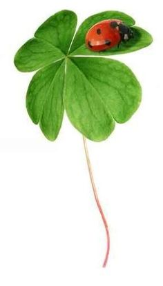 Four Leaf Clover Tattoo, Clover Tattoos, St Pattys, St Patricks Day, 4 Leaves, Plant Leaves, Shamrock Tattoos, Clover Green, Paddys Day