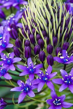 pretty purple flowering plant
