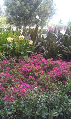 Property flowers