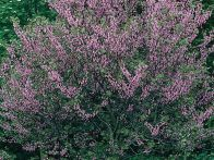 The blossoms from these flowering trees offer a colorful, post-winter display. Flip through the gallery from HGTV Gardens to find the best tree for your garden.