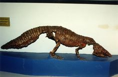 """""""Wonderful armoured crocodile relative from Argentina, Neoaetosauroides. Small Triassic tank. #FossilFriday"""""""
